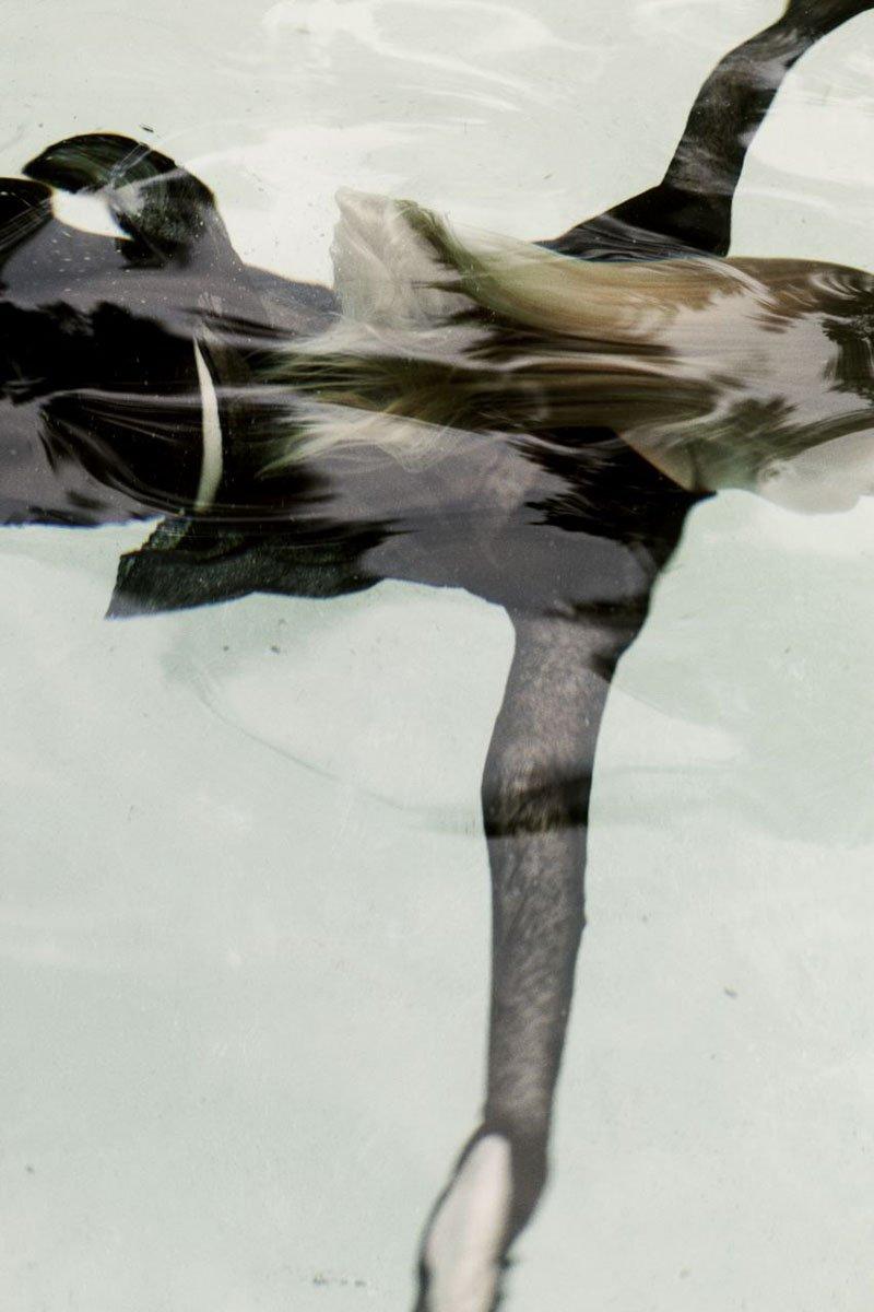 Samuji Spring 2011 | Lovisa I by Juliana Harkki